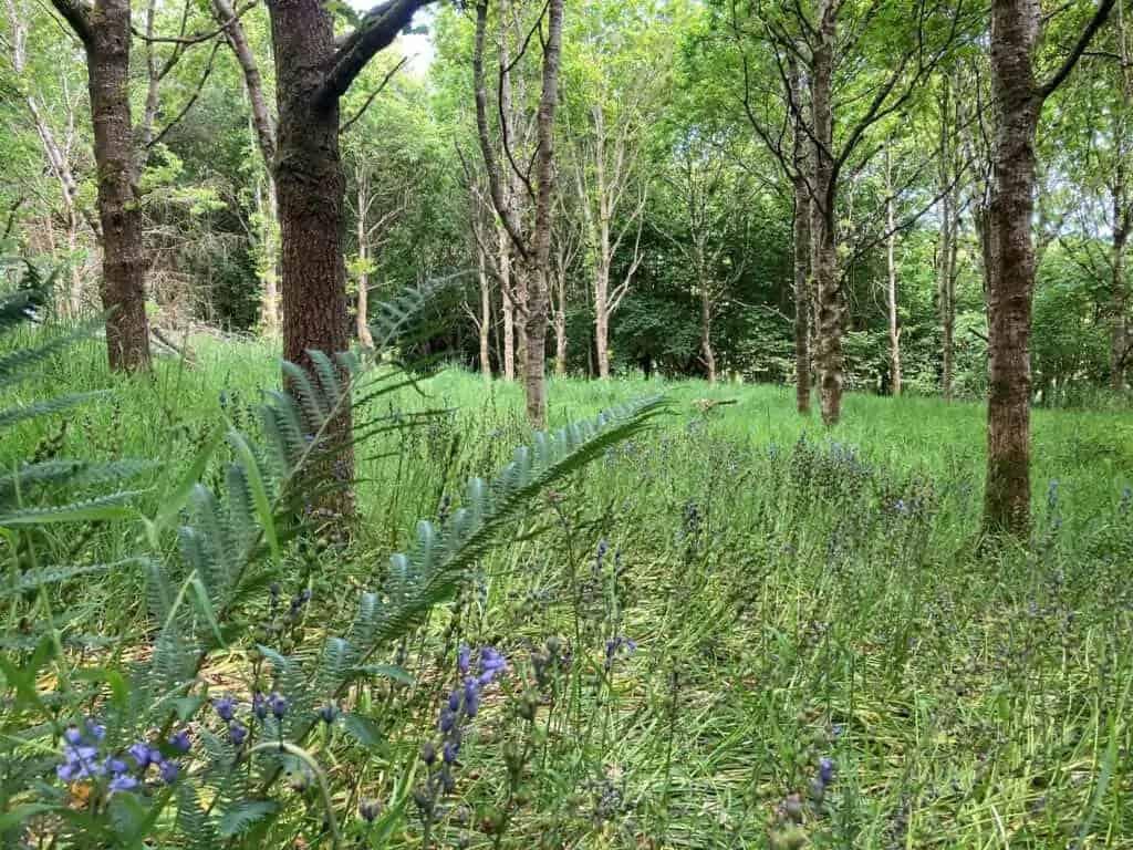 Established woodland planted 30 years ago